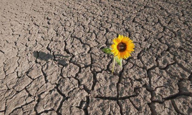 Dalla paura alla resilienza: un percorso di creatività adattiva