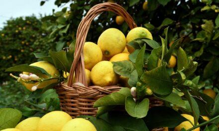 #40ENA E GUSTO: Saperi e sapori di Sicilia – Lo sciroppo di limone
