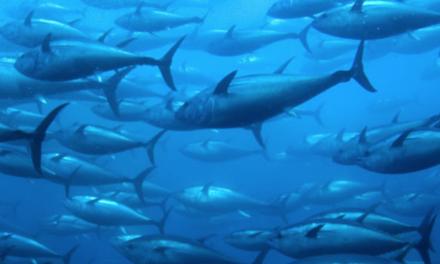 Gusto senza sprechi – Peperoni al tonno